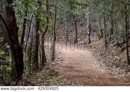 Path At The Robert Louis Stevenson State Park In Napa County, California, Usa, Featuring The Typical