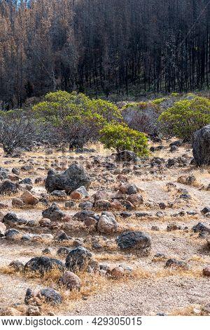 Labyrinth  Rocks At Robert Louis Stevenson State Park Along The Trail, Napa County, California, Usa,