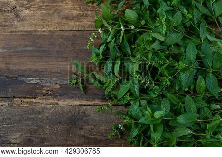 Fresh Mint On A Wooden Background With Place For Text. Leaves, Stems And Flowers. A Fragrant Plant.
