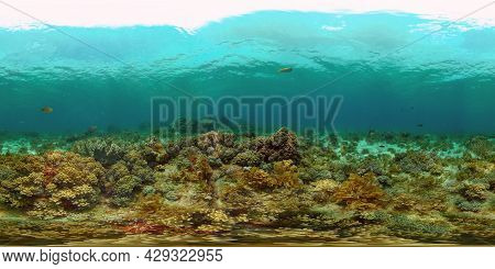 Tropical Coral Reef Seascape With Fishes, Hard And Soft Corals. 360 Panorama Vr