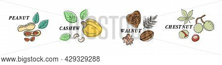 Nuts Color Line Icons Set. Nuts Are The Hard-shelled Fruit Of Certain Plants. Cashew, Chestnut, Haze