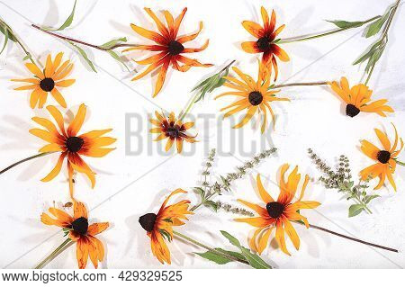Colorful Rudbeckia Flowers Abstract Flower Arrangement Autumn Background. Greeting Card Happy Thanks