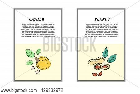 Set Of Cards Banners, Tags, Package With Hand Draw Nuts - Hazelnut, Almond, Pistachio, Cashew, Walnu