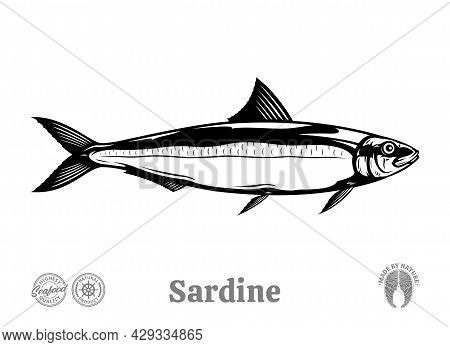 Vector Sardine Fish Illustration