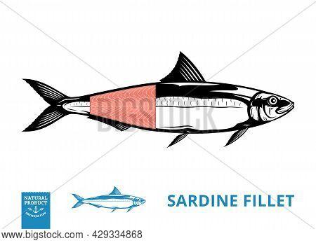 Vector Sardine Illustration With Fillet