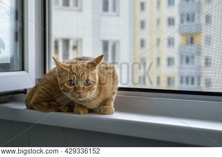 Close-up Of A Frightened Cute Ginger Tabby Kitten Sitting On A Windowsill With A Mosquito Net And Lo