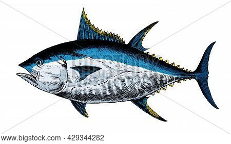 Tuna Bluefin, Fish Collection. Healthy Lifestyle, Delicious Food. Hand-drawn Images.