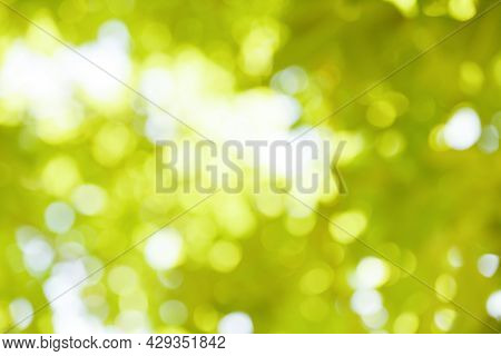 Bokeh Blur Background Branch Tree Green Leaf On Sky Sunlight In Tropical Forest Tree Summer Day Ligh