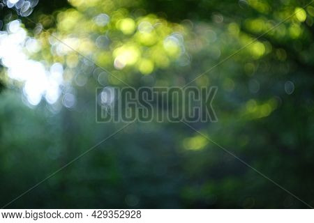 Green Background Bokeh From Wood Abstract Background. Defocused Background Of Balls. Forest Blurred