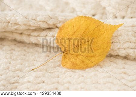 Closeup Photo Of Yellow Autumn Leaf And Soft Woolen Knitted Fabric