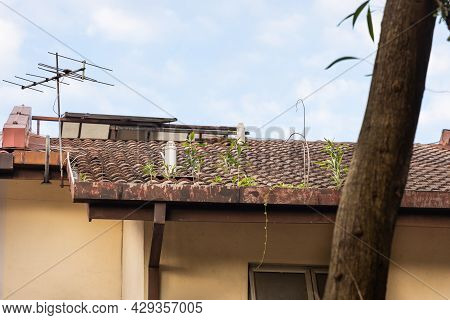Clogged Roof Rain Gutter Full Of Dry Leaf And Plant Growing In It