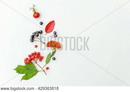 Autumn Floral Composition. Plants Viburnum Rowan Berries Dogrose Fresh Flowers Colorful Leaves Isola