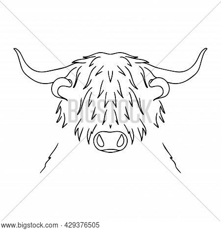 Vector Bull. Long-haired Buffalo Illustration. Sketch Of A Hoofed Animal Tattoo. Strong Horned Anima