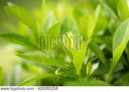 Nature Green Tree Fresh Leaf On Beautiful Blurred Soft Bokeh Sunlight Spring Summer Vintage Backgrou
