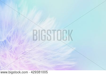 Soft Abstract Gradient Background, Abstract Pastel Dandelion