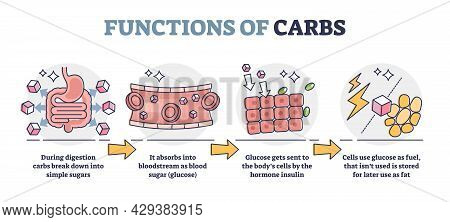 Functions Of Carbs And Carbohydrates In Digestive System Outline Diagram. Educational Glucose Produc