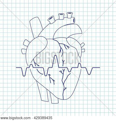 Human Heart Vector Line Art Icon Of Internal Organ Isolated On Background.