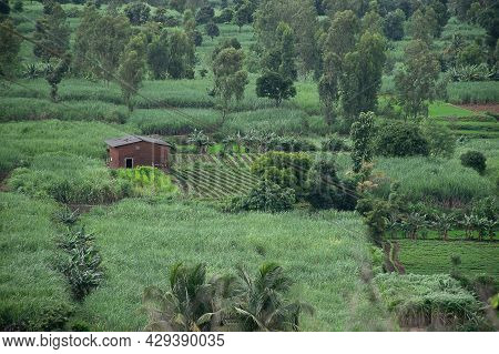 Stock Photo Small Red Brick Farm House Situated In The Middle Agricultural Land Surrounded By Differ