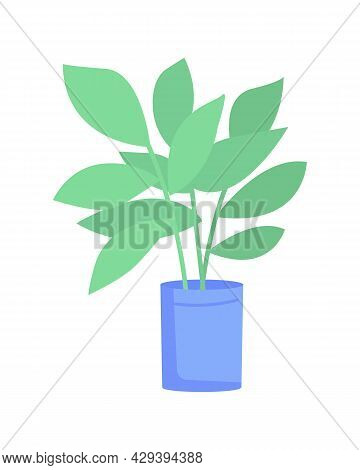Ficus Elastica Plant In Blue Pot Semi Flat Color Vector Object. Full Sized Item On White. Rubber Tre