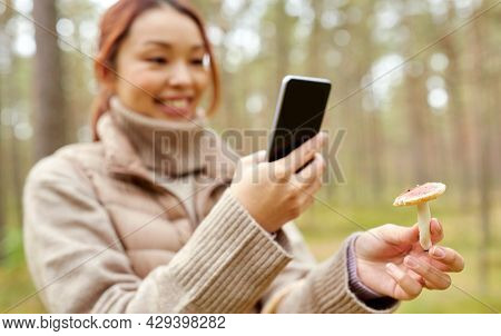 technology, leisure and people concept - young asian woman with smartphone using app to identify mushroom in autumn forest
