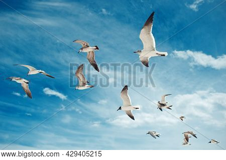 Flock Of Seagulls Flying On The Blue Sky With Clouds Background. Birds Collection. Group Of Beautifu