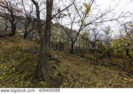 The Great Wall Of China, The Majestic Large Landmark Of China In Autumn Surrounded With Colorful Tre