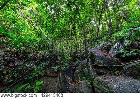 Rocks In The Middle Of The Rainforest Of Sumatra, Indonesia. Off Trail In The Green Hell Of The Rain