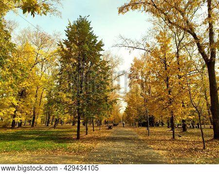 Autumn Park. Fallen Yellow Autumn Leaves Lie On An Asphalt Road. Autumn. Blue Sky.