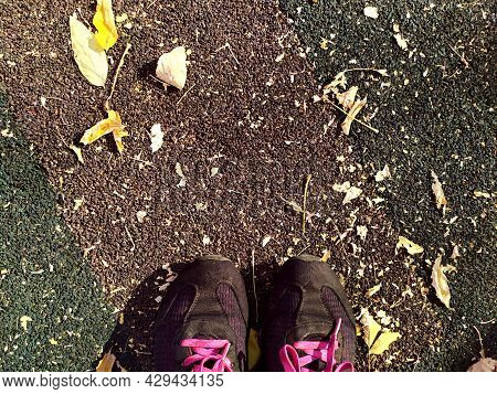 Autumn. Sports Shoes Sneakers Gray Colored Against The Background Of Autumn Fallen Leaves. You Can S