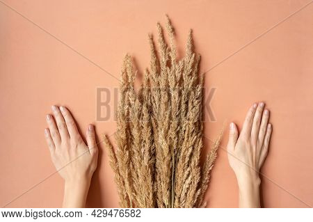 Beautiful Female Hands With Natural Manicure Near Grass.