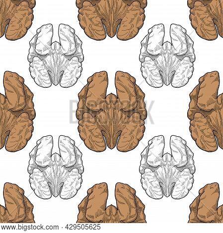 Walnuts Snacks Seamless Pattern Vector Food Vitamins Proteins