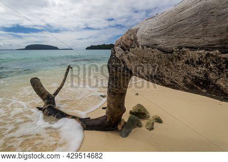 Fallen Tree At Champagne Beach On Santo Island In Vanuatu