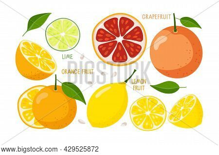 Citrus Fruit Set. Whole, Half And Slice Of Fruits Isolated On White. Fresh Citrus Fruits With Inscri