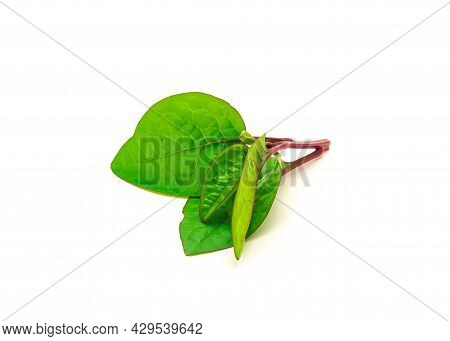 Young Vine Branch Of Red Malabar Spinach Basella Alba Leaves Isolated On White