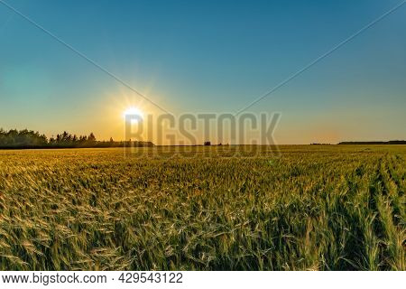A Walk Through A Field Or Meadow In The Evening Sun At Sunset. Calmness, Contemplation And Peace Whe