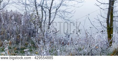 Frost-covered Trees, Shrubs And Thickets On A Foggy Winter Morning