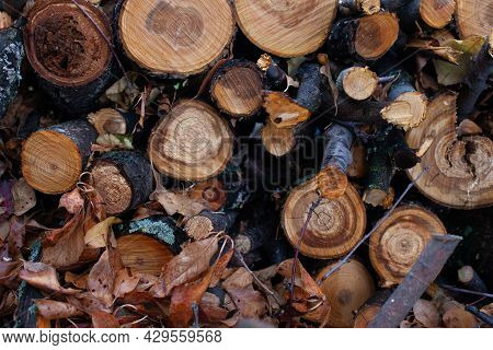 Felled Trees In Forest. Freshly Cut Tree Trunks, Packed Stacked On Top Of Each Other, Background Of
