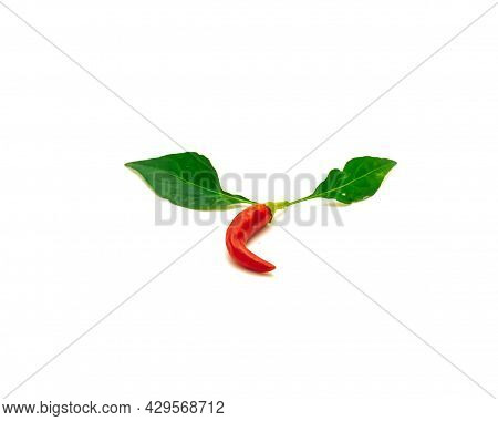 Red Thai Hot Chili Pepper With Green Leaves Isolated On White