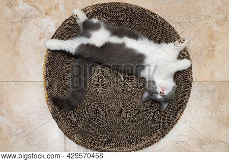 A Cute British Short Hair Cat Sleeping On A Corrugate Cat Scratcher