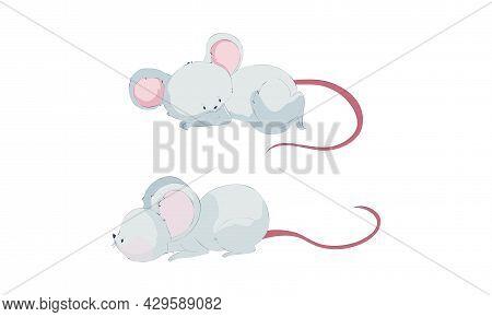 Cute Funny Mice Set. Adorable Little Mouse Activity Cartoon Vector Illustration