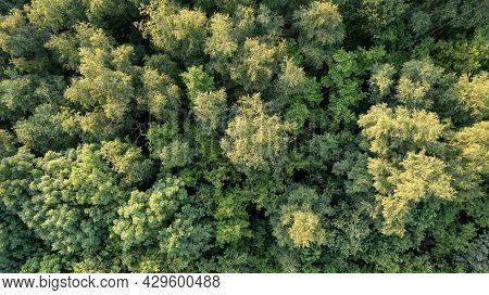 Aerial Bird View Over Beautiful Temperate Coniferous Forest Over Top Of Trees Showing The Amazing Di