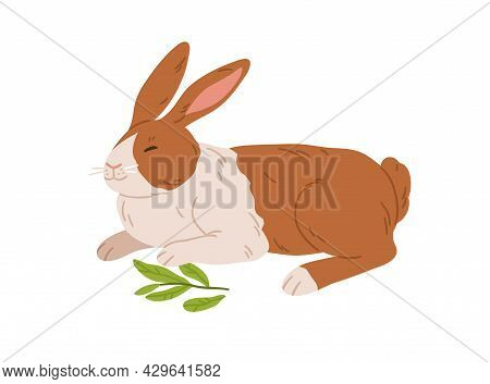 Cute Happy Rabbit. Small Spotty Bunny Breed Lying. Domestic Animal With Spots On Fur. Adorable Coney