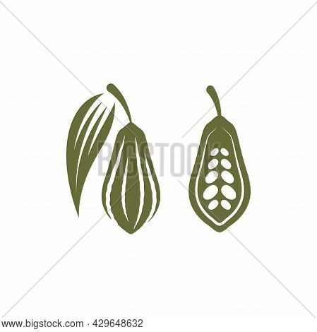 Chocolate Cocoa Bean Green Icon. Cacao Food And Cosmetics Butter. Cosmetic And Culinary Ingredient.