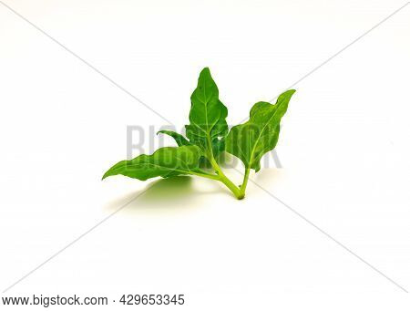 Branch Of New Zealand Spinach Or Tetragonia Tetragonioides Leaves Isolated On White