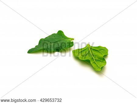 Two Homegrown New Zealand Spinach Or Tetragonia Tetragonioides Leaves Isolated On White