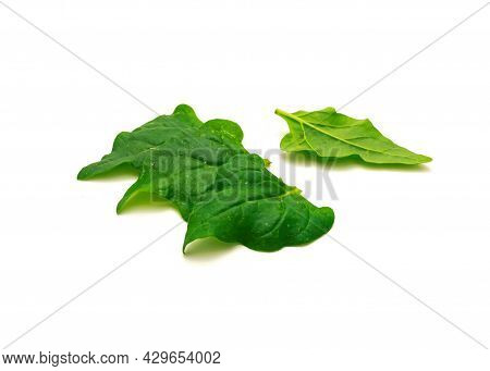 Pile Of Homegrown New Zealand Spinach Or Tetragonia Tetragonioides Leaves Isolated On White