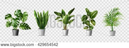 Realistic House Plats Set With Monstera Sansevieria Banana Palm Ficus And Rhopalostylis In Pots On T