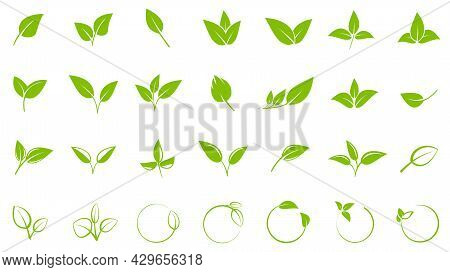 Collection Of Green Leaves, Design Elements For Logos Or Symbols, Vector Illustration Icon Set