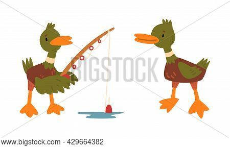 Male Mallard Duck With Orange Bill Standing With Fishing Rod Catching Fish Vector Set