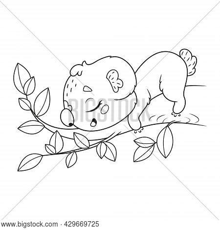 Cute Koala Sleeping On Eucalyptus Branch Coloring Page. Cartoon Vector Outline